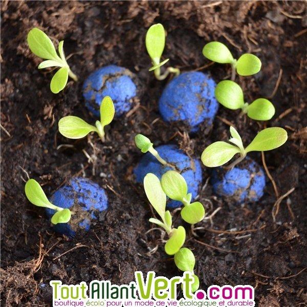 10 bombes graines bleuet flower power lancer pour fleurir partout achat vente cologique. Black Bedroom Furniture Sets. Home Design Ideas