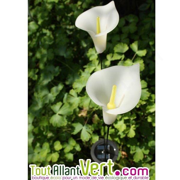 Balise solaire fleur d arum color planter au jardin for Balise solaire jardin